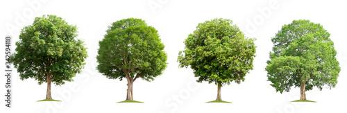 Fototapeta set collection tree isolate on white background obraz