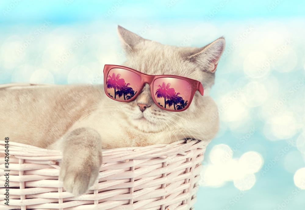 Fototapeta Gatito Disfrutando Sus Vacaciones  con su Lentes de Sol - Gatitos Felinos