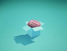 Human Brain Box