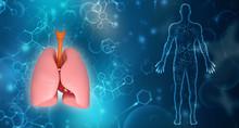 Healthy Human Lungs 3d Illustr...