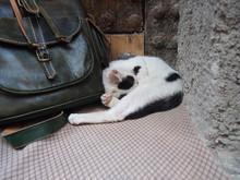 A Cat Taking A Break In Front ...
