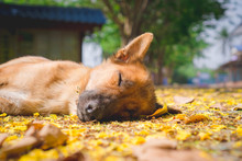 Dog Sleeping On The Ground