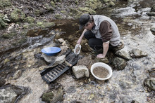 Outdoor Adventures On River. Gold Panning, Man Pours Sand And Gravel Into A Sluice Box In Search Of Gold
