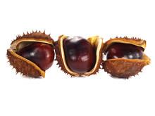 Chestnut Pods Isolated On White