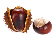Chestnut And Chestnut Pod Isol...