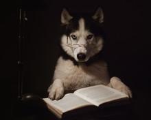 Clever Dog Reads An Interestin...