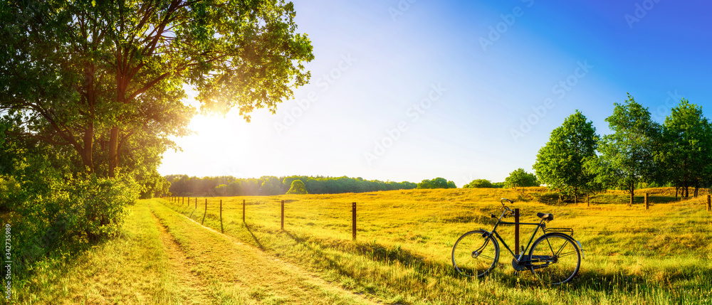 Landscape in summer with trees and meadows in bright sunshine
