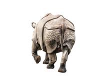 Rhinoceros Ass On White