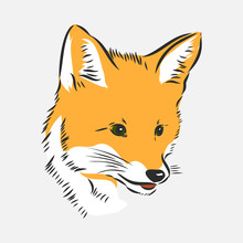 Fox Portrait. Hand Drawn Vector Illustration. Can Be Used Separately From Your Design. Portrait Of A Fox, Fox Head Vector Sketch Illustration