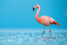 Flamingo At Beach