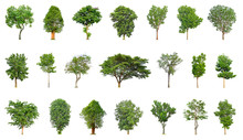 Tree Collection Isolated On Wh...
