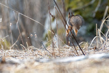 Squirrel Running Away