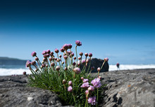 Close-up Of Purple Flowering Plants By Sea Against Sky