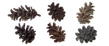 Pine Cone Isolated On White Ba...