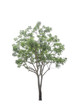 Trees on a isolated white background
