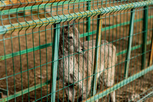 Fawn In The Cage