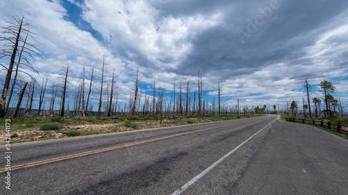 Fotografia, Obraz verbrannte Bäume entlang der Straße