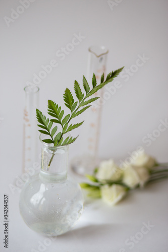 Fototapeta Green and white flowers grow in a glass beaker obraz na płótnie