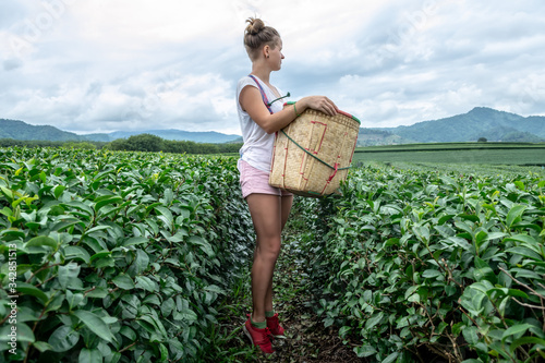Profile view of young sexy woman with the harvest basket in a tea plantation - e Fototapeta
