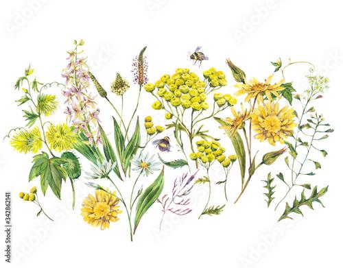 Leinwandbilder - Vintage watercolor set of summer yellow meadow wildflowers.