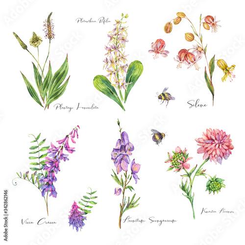 Leinwandbilder - Vintage watercolor set of summer purple meadow wildflowers.