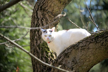 White Cat At The Tree In The Garden