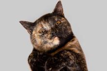 Close Up Portrait Of Cute Tort...
