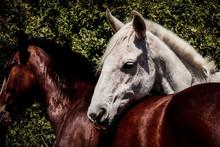 Caballo En La Pradera - Beautiful Horse In The Valley