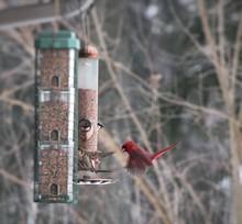 Cardinals Flying Around Feeder...
