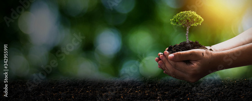 Fototapeta World environment day and save environment concept, close up hand holding soil with seedling plant or small tree with dark ground, save and protect earth concept obraz