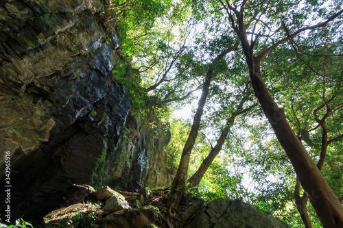 裏見の滝 登山道 長崎県大村市 Urami waterfall Trail Nagasaki Oomura City Canvas Print