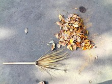 High Angle View Of Broom By Heap Of Dried Leaves On Road During Autumn