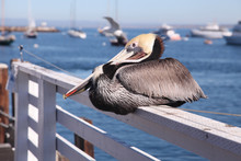 Pelican Perching On Railing At Pier By Sea
