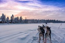 Sled Dogs On Snow Covered Landscape Against Sky During Sunset