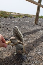 Cropped Hand Of Person Feeding Peanut To Chipmunk On Field