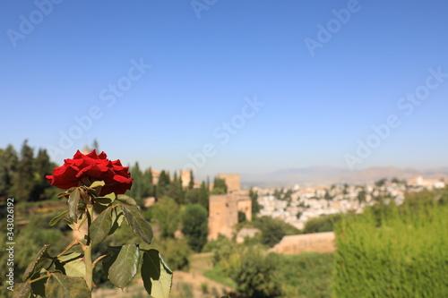 Stampa su Tela Fiore in primo piano con Alhambra sullo sfondo