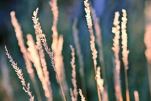 Close-up Of Dried Plants
