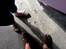 Low Section Of Man And Woman Standing By Paw Print On Footpath