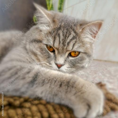 Photo Matilda the cat