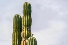 Bird On Baja California Desert Cactus
