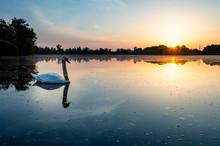 Swan In Lake Against Sky Durin...