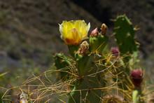 Closeup Of A Nice Yellow Cactu...