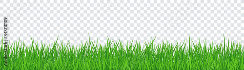 Papel de parede Green Grass Isolated Transparent background. Vector Illustration