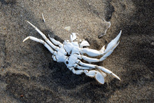 Dead Crab In The Sand On The B...