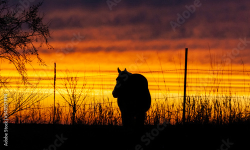 Photo Silhouette of a horse and a brilliant orange and yellow sunset, wire fence, and grass