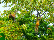 Tortuguero National Park, Limon, Costa Rica