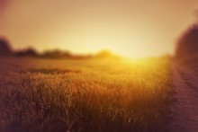 Sun Shining Through Trees On F...