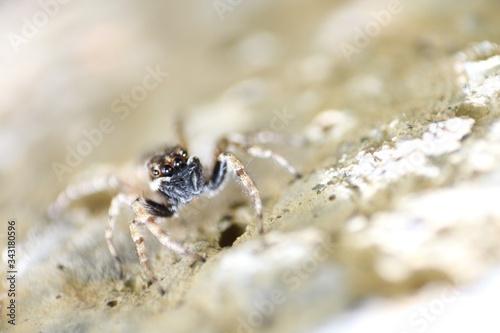 Photo Microcosm, arachnid, spider, focus, close-up