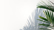 Tropical palm leaves with shadows on white concrete wall abstract blurred tropical background..