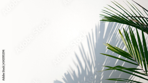 Obraz Tropical palm leaves with shadows on white concrete wall abstract blurred tropical background.. - fototapety do salonu